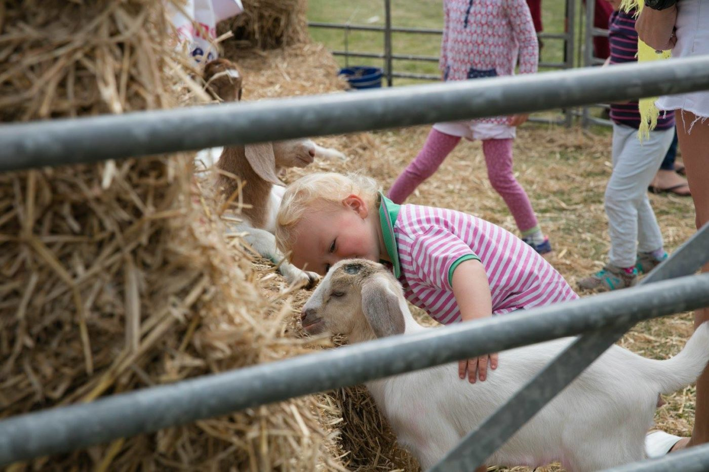 Open Farm Sunday 2017, child with goat