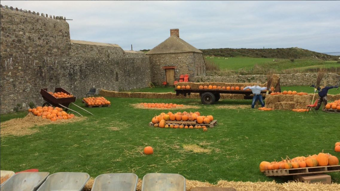 Treginnis Pumpkin Patch harvest