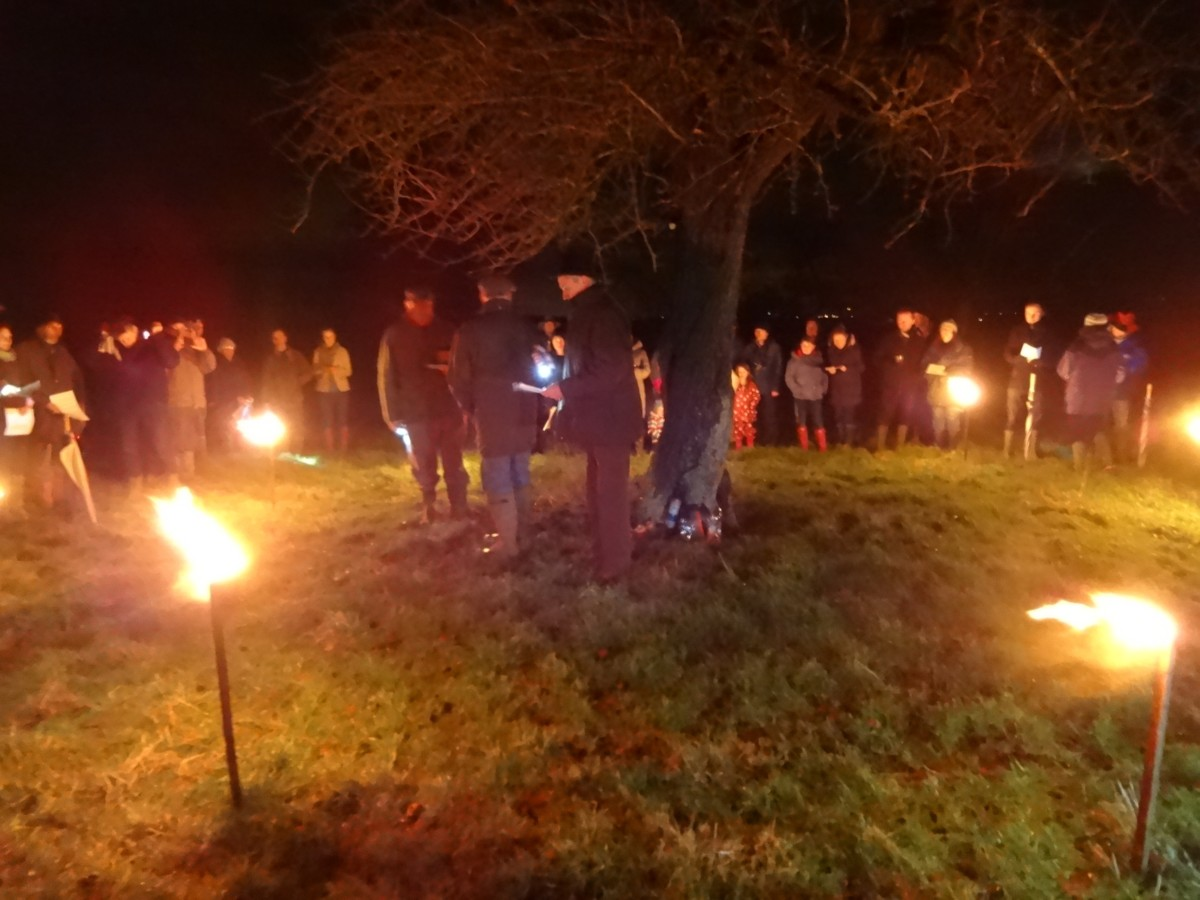 Wassail people around tree with torches
